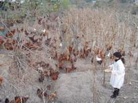 我的养殖创业之路——江油市战旗镇养鸡能手 杨明霞