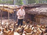 养鸡脱贫困 共谱富裕曲